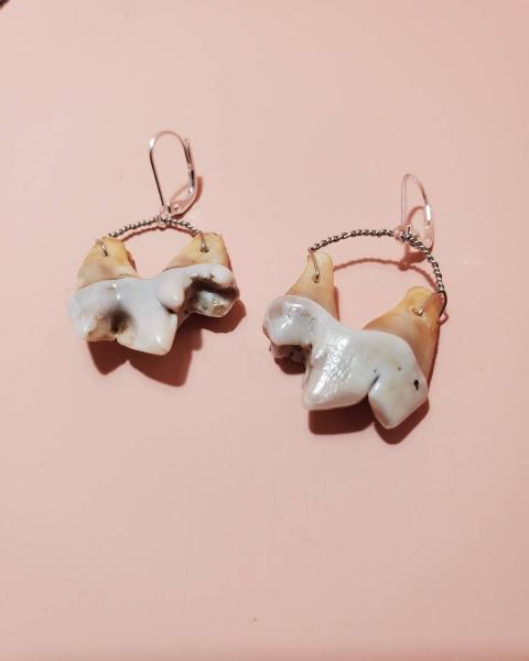 Coyote Molar Tooth Earrings