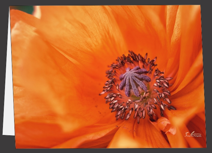 Poppy - Greeting Cards