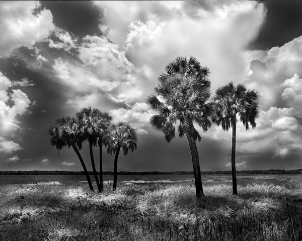 """7 Palms, FL"" 32x40 Framed Presentation"