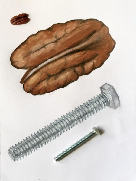 """Nut and a Bolt"" by Paola V"