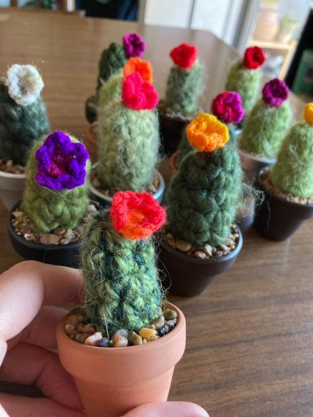 Mini Mystery Crocheted Cactus