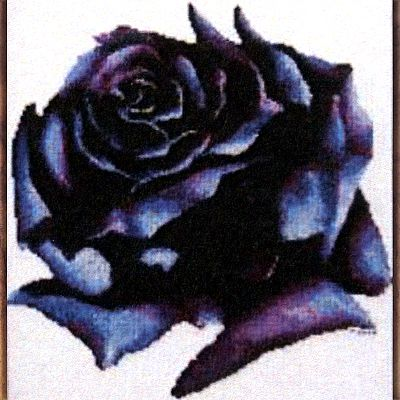 Dark Rose Cross Stitch Pattern - SIW-683