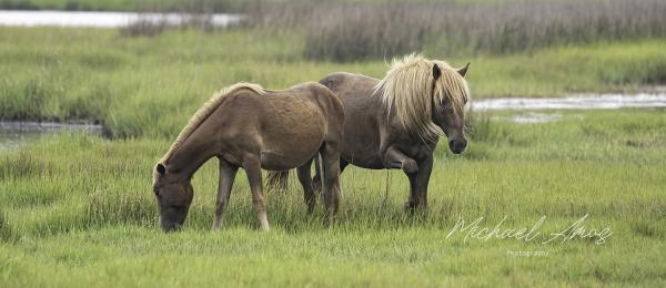 Assateague Duo